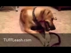 Puppy can't chew through the super durable TUFF Leash chew proof dog leash.