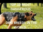 TOP 10 Most Dangerous Dog Breeds In The World - HD