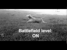 Funny dog sneaking through battlefield like a soldier