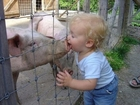 Origin of Swine Flu Found!!