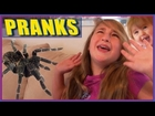 Big Spider Prank - Girls Freaks Out - Dirty Diaper Pranks - Scare Tactics