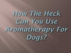 Aromatherapy For Dogs- Heal Your Dog Naturally