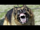 Top 10 Most Dangerous Dog Breeds Based on Bite Fatalities - American Veterinary Medical Association