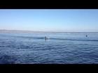 Odegaard Surfing 3