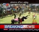 Pongal Festival - Jallikattu Bull Fight in Tamil Nadu